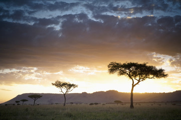 Trees and animals across african landscape at sunset, Kenya