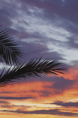 Palm Fronds Silhouetted Against Sunrise; Spain