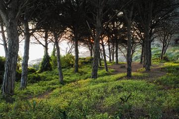Trees Along The Coast At Sunset; Tarifa, Cadiz, Andalusia, Spain