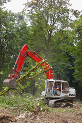 Backhoe Clearing A Forest Area; Portland, Oregon, United States of America