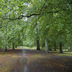 Wet Path Covered In Fallen Leaves With Lush Green Trees; Uppsala, Sweden