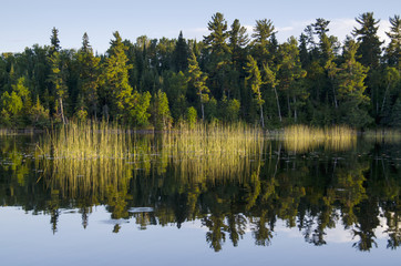 Trees Along The Water's Edge; Lake Of The Woods, Ontario, Canada