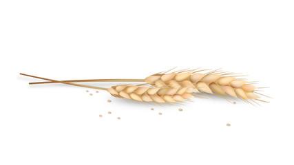 Getreideähren isoliert