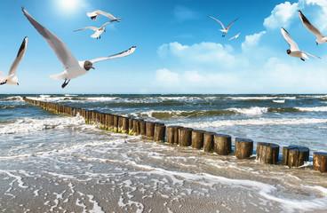 Fototapete - Ostseeküste v2