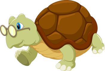 Turtle wearing glasses