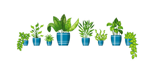 Set of different plants in flowerpot