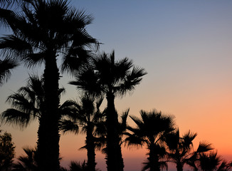 Palm trees silhouette on sunset tropical beach. Diagonal