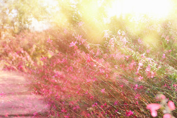 double exposure of flower field bloom, abstract photo