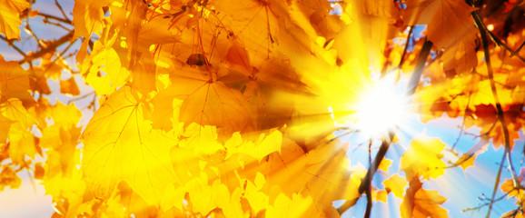 Herbstblätter in der Sonne - Autumn leaves in the sun