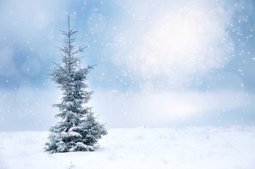 Winter Christmas landscape with spruce and snowflakes