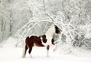 Horse running in new fallen snow