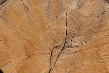 bois matière arbre noble matière texture coupe tronc forêt  Fotobehang