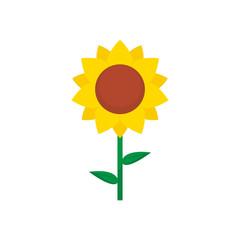 Sunflower vector isolated