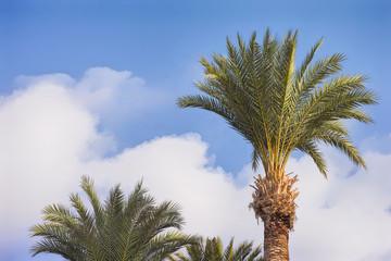 Palm trees on a tropical island