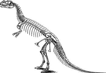 Vintage image tyrannosaurus skeleton
