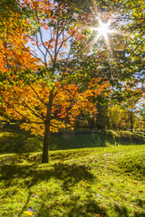 The warm autumn sun shining through golden trees