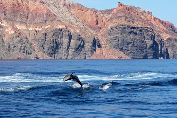 La paz dauphin saute