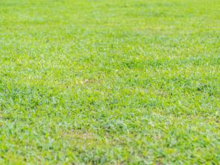Closeup of  green grass background