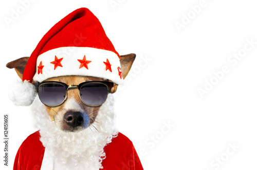christmas dog hund im weihnachtskost m freigestellt stock photo and royalty free images on. Black Bedroom Furniture Sets. Home Design Ideas
