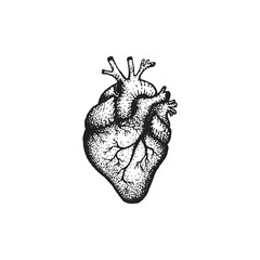 vector hand drawn heart illustration.