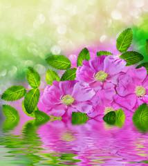 Delicate wild rose garden flowers