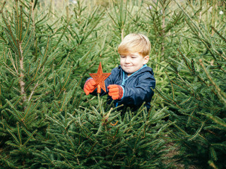 Little blonde haired toddler puts a tree topper red star-shaped to small fir Christmas