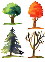 Watercolor illustration of trees