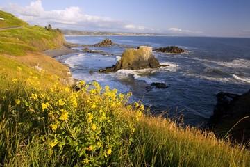 Wildflowers Along Coast, Yaquina Head, Oregon, Usa