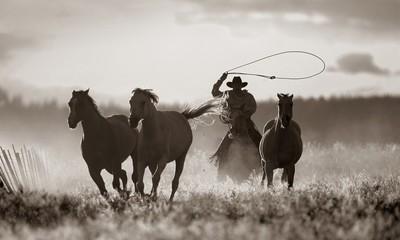 Cowboy Lassoing Horses; Senaca, Oregon, Usa