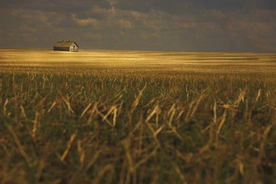 Tofield, Alberta, Canada; An Old Barn In A Field