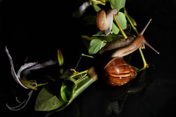 Snail on flower life.
