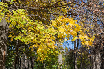 Landscape in the city park in sunny autumn day