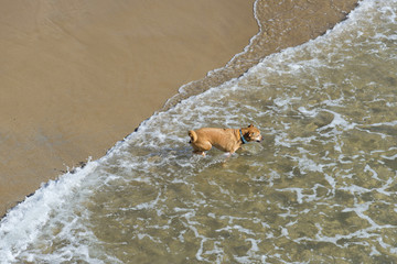 Dog running on the sea