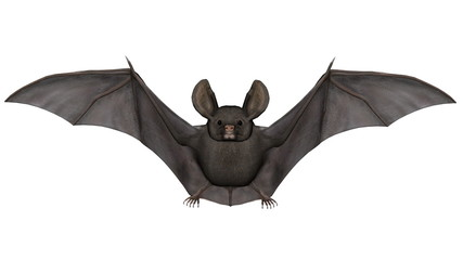 Flying bat - 3D render