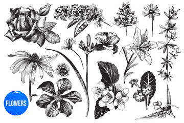 Hand drawn garden flowers set