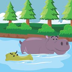 crocodile swimming with hippo