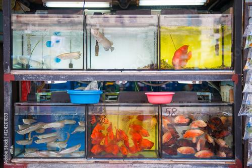 Superb Fish For Sale In Goldfish Market