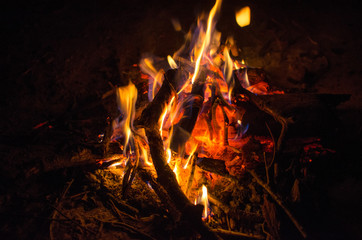 coals of a campfire in the forest
