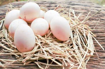 eggs on eggs background