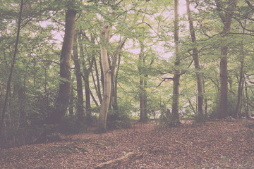 Woodland scene at the start of autumn Vintage Retro Filter.