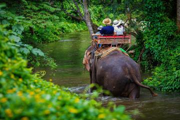 couple tourist riding on elephants