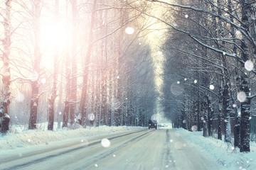 road trees winter sunset