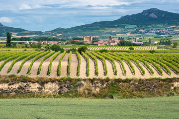 Wall Mural - Viñedos con el pueblo de Sajazarra al fondo, La Rioja (España)