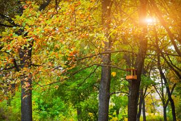 Birds feeder in the autumn park.