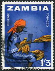 ZAMBIA - 1964: Woman tobacco worker, series Zambia indepence