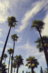 Palm trees on the sky background