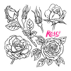 set of sketch roses