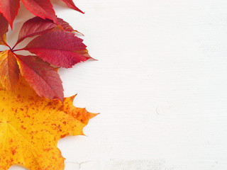 Red and yellow leaves upon white wooden background. Copy space for your text.