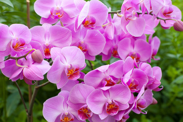 Искусственная орхидея в горшке 17
