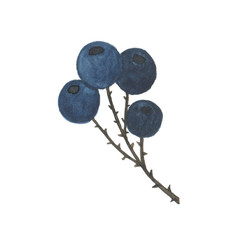 Watercolor branch of berries isolated on white background